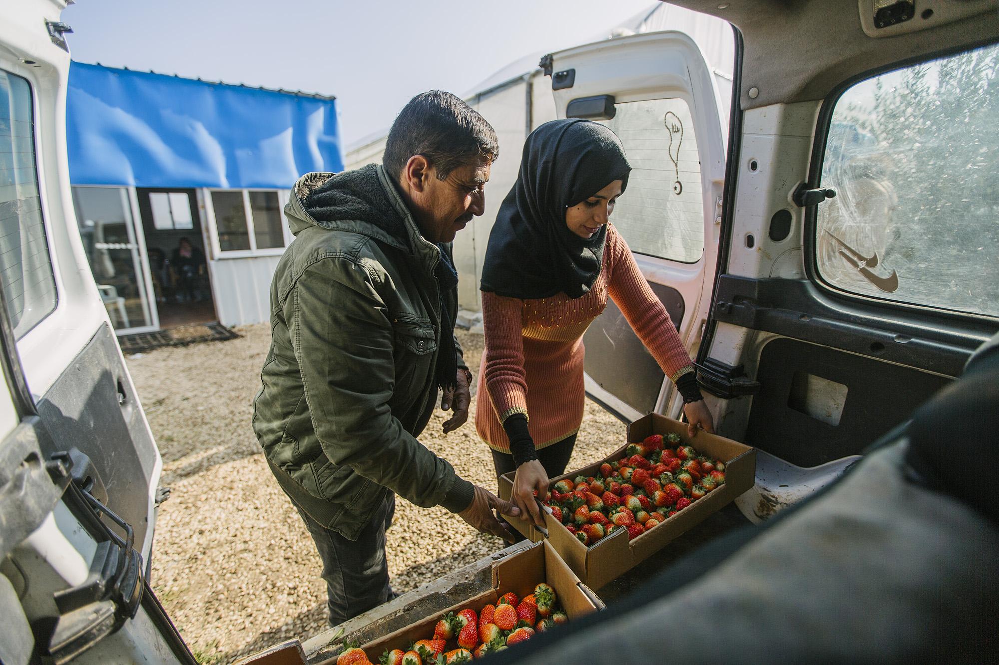 USAID-Israel-Day5-Strawberries-_07A7964.jpg