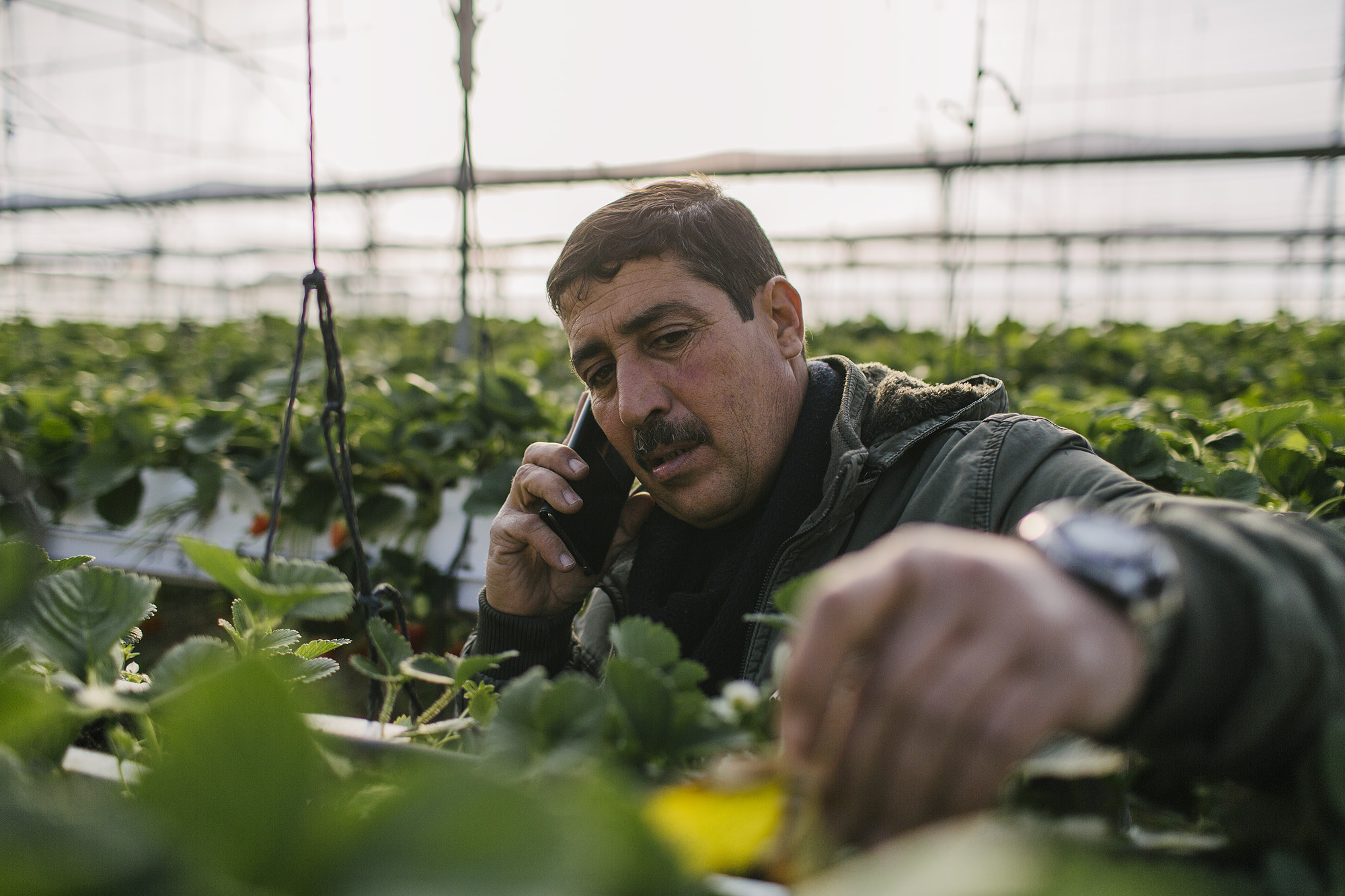 USAID-Israel-Day5-Strawberries-TD4A8013.jpg