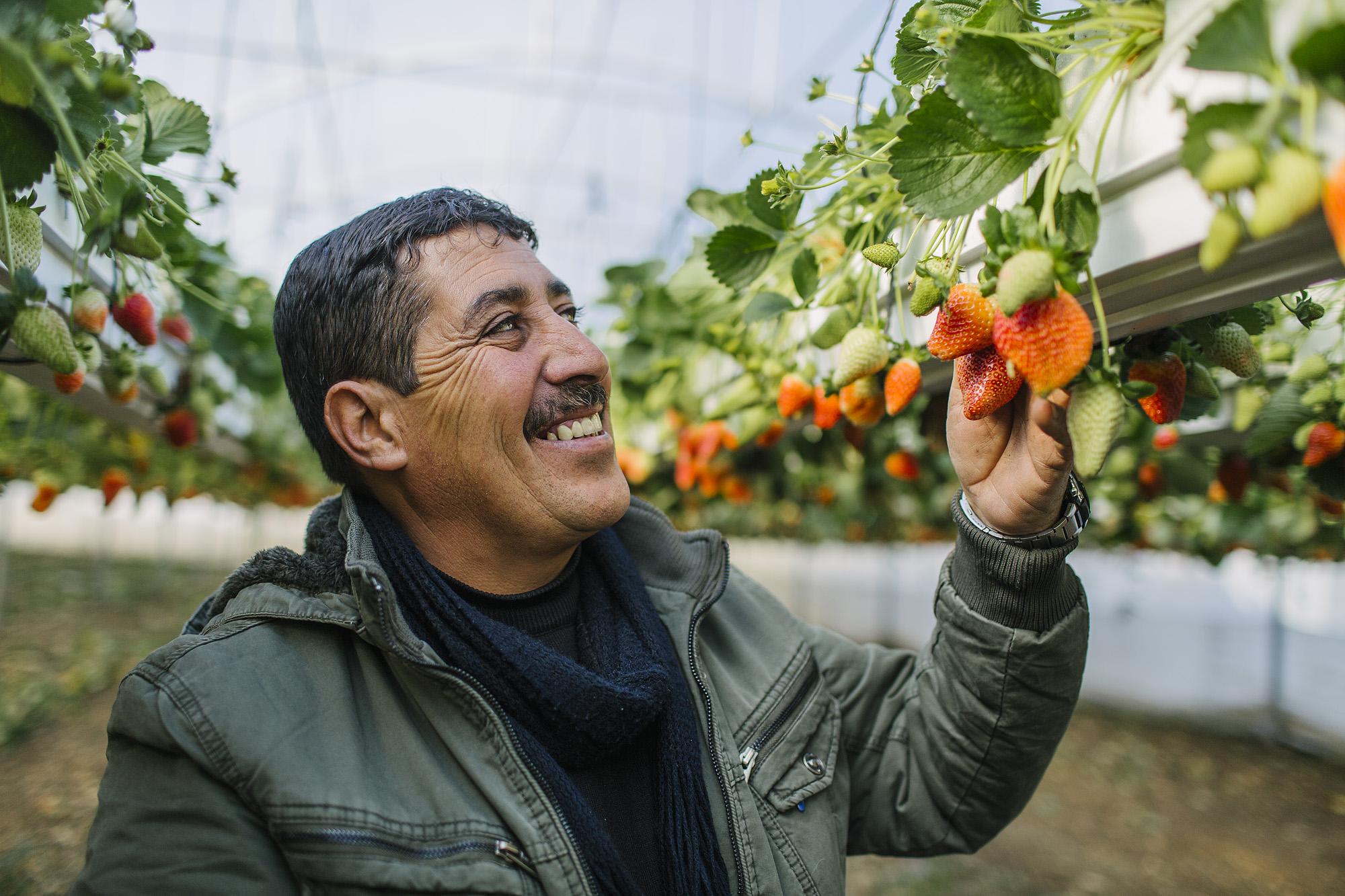 USAID-Israel-Day5-Strawberries-TD4A8112.jpg