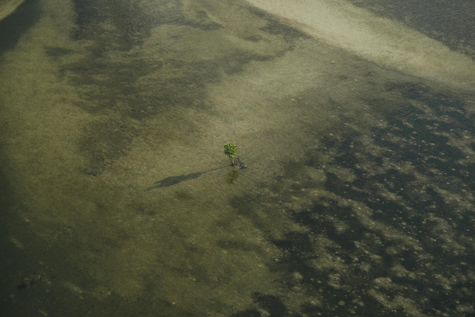 Diani-Shimoni-Neptune-_K4_9996.jpg