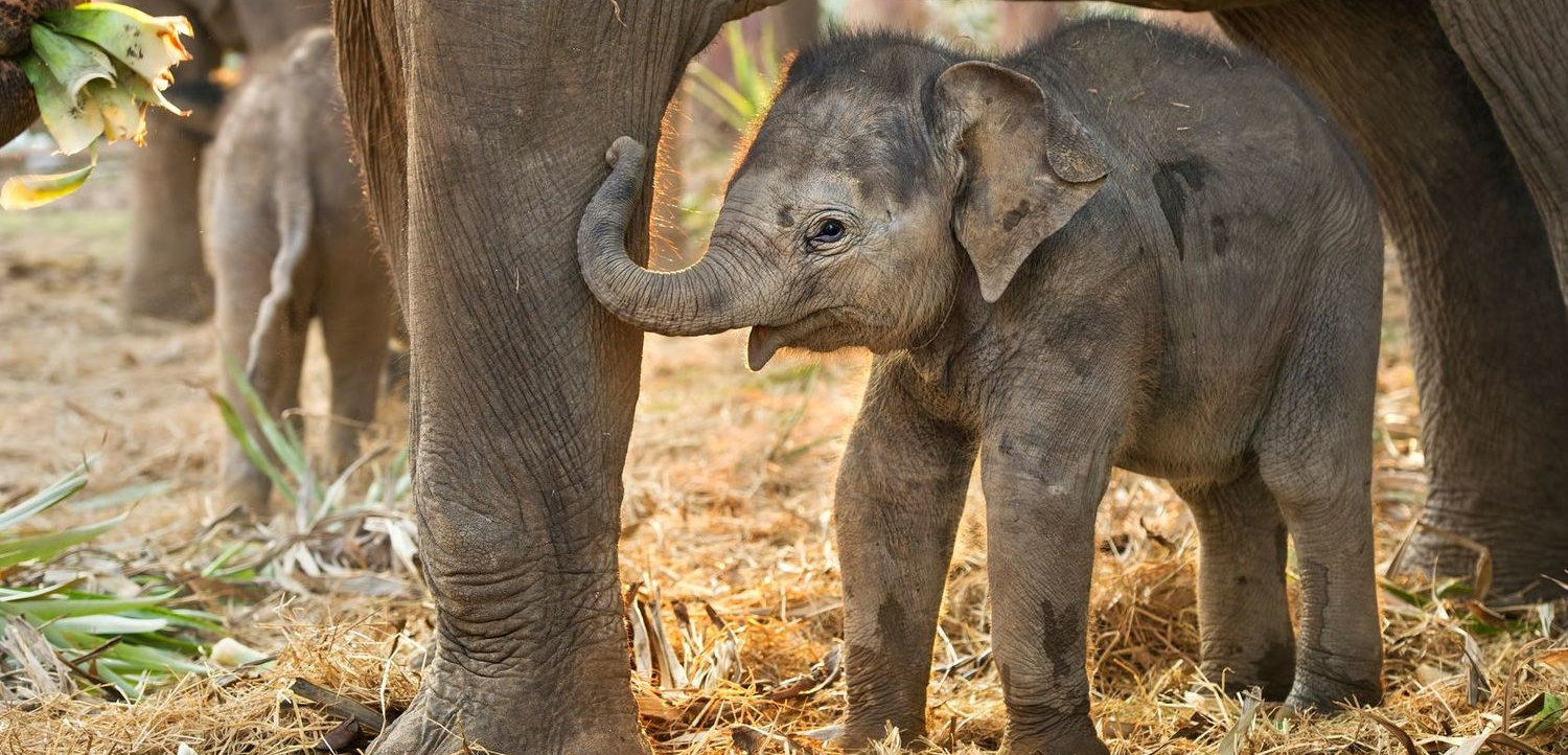 The birth of an elephant calf at the Oregon Zoo excited the public and elicited a story about the calf's true owner, which escalated into a communications crisis for the Zoo.