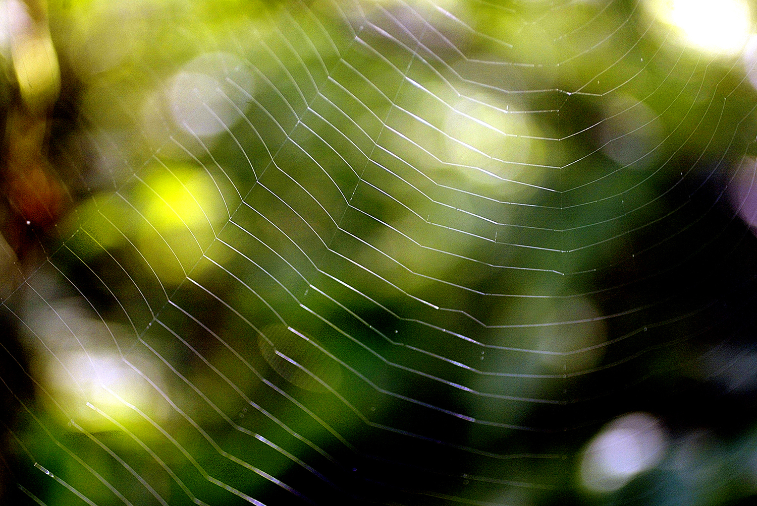 A spider web glows in the sunlight at Lincoln Memorial Garden on the shore of Lake Springfield. Ted Schurter/The State Journal-Register