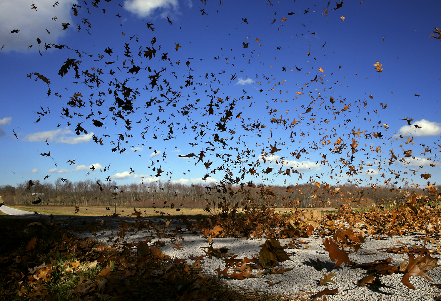 Leaves swirl into the air near Buckhart Road as high winds blast across the region Sunday, Nov. 17, 2013. Ted Schurter/The State Journal-Register