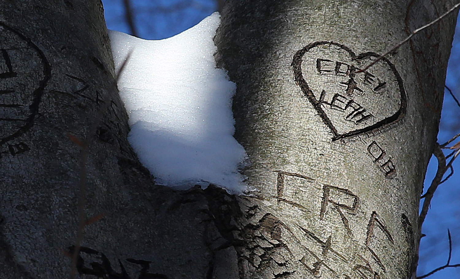 Corey and Leah, has your love grown like your heart seen up high? Photographed at Lincoln Memorial Garden on Monday, Feb. 10, 2014. David Spencer/The State Journal-Register