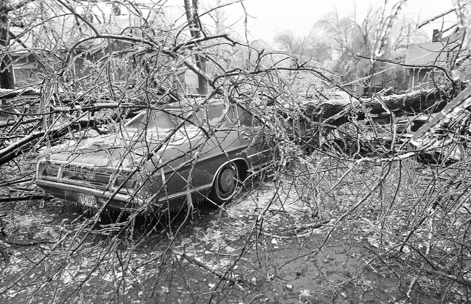A car at Eleventh Street and Stanford Avenue is crushed by a tree.