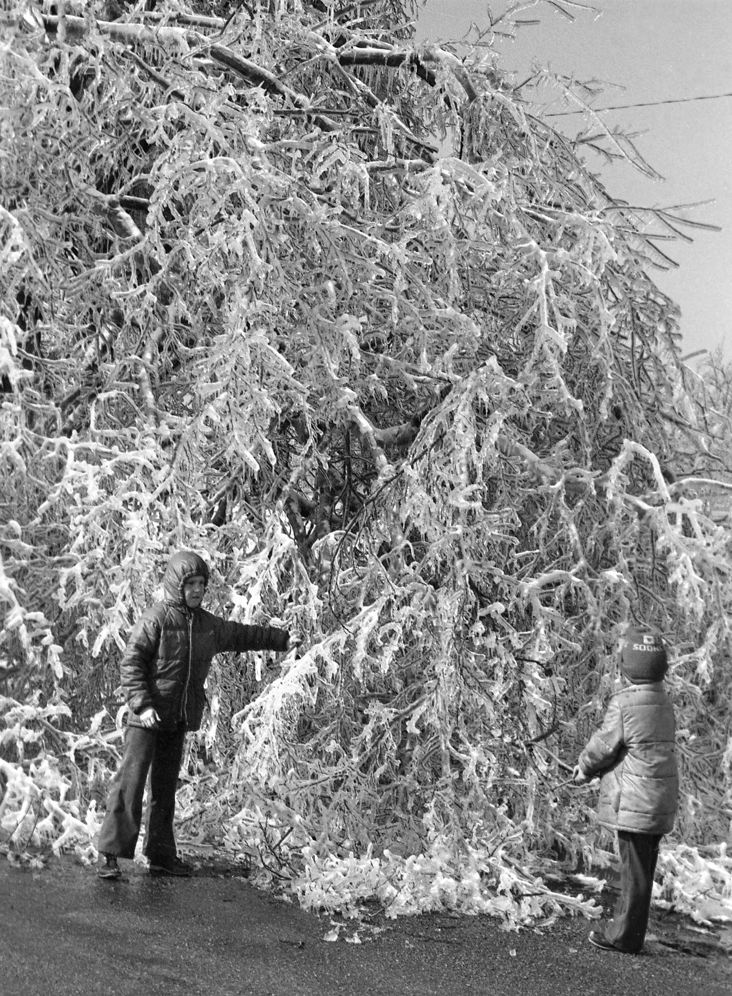 Kip and Kerry Allen knock ice from a tree in Iles Park, March 1978