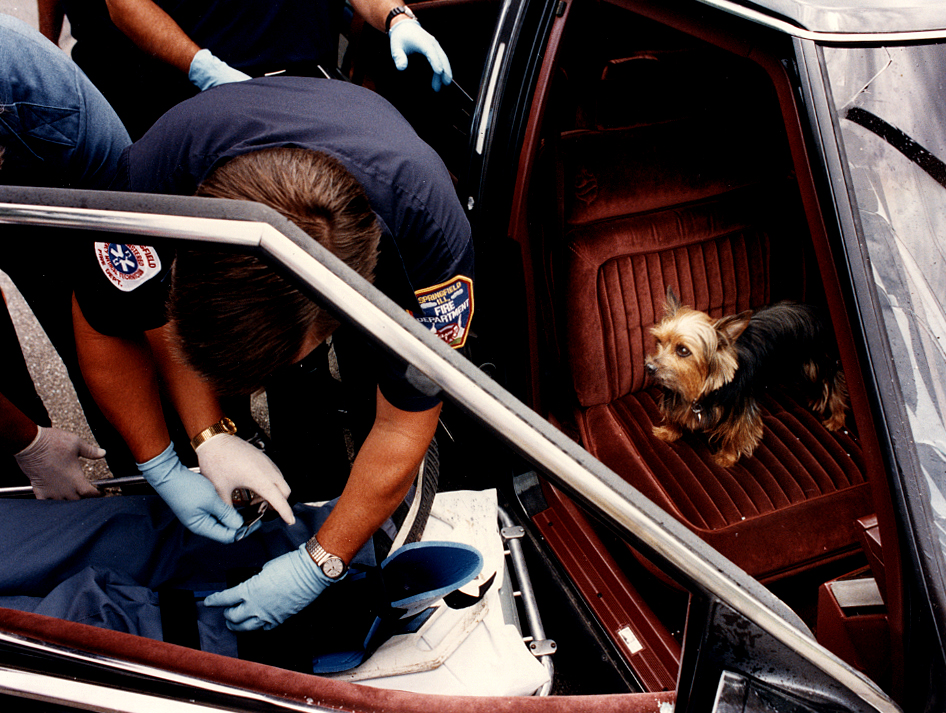 """Poncho, a yorkshire terrier, seemed most concerned as he surveyed his master at left from the passenger seat of the family automobile after both were involved in an accident with a cement truck at the intersection of 7th Street and Spruce Street in Springfield in early July, 1993. My caption continued: """"The owner of the dog was transported to St. John's Hospital and the dog was safely taken away by an EMT. Later, the EMT said the crash victim was concerned more with the welfare of his dog than himself."""" David Spencer/The State Journal-Register"""