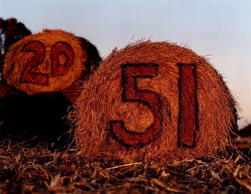 Hay bales painted with numbers for members of the Winchester High School football team Wildcats glow in late afternoon light taken in November, 1995 for a Heartland magazine photographic essay I did on the season of Fall. David Spencer/The State Journal-Register