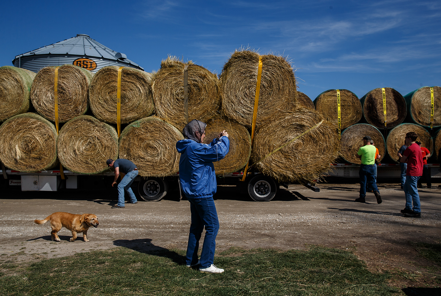 Carolyn Jackson, center, with the family dog Lilly following along, snaps a photo as volunteers and members of the Cass-Morgan Farm Bureau Young Leaders load hay on trucks for a wildfire relief donation drive at Jackson Farms in Jacksonville March 24. The hay and supplies donated from around central Illinois was taken by convoy to aid Kansas livestock farms devastated by wildfires. Justin L. Fowler/The State Journal-Register