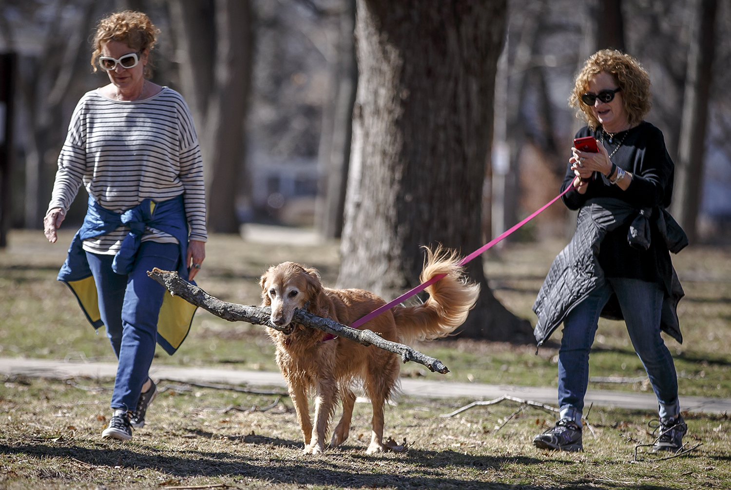 """""""As soon as she finds the perfect stick she heads for home,"""" said Patty Patia, right, as she walked her golden retriever, Gracie, along with her sister, Deborah Staley, left, in Washington Park, Monday, Feb. 26, 2018, in Springfield, Ill. Gracie picked up the stick after taking a dip in the lower lagoon and was carrying it through the park on her way home as temperatures climbed into the upper 50s with abundant sunshine. [Justin L. Fowler/The State Journal-Register]"""