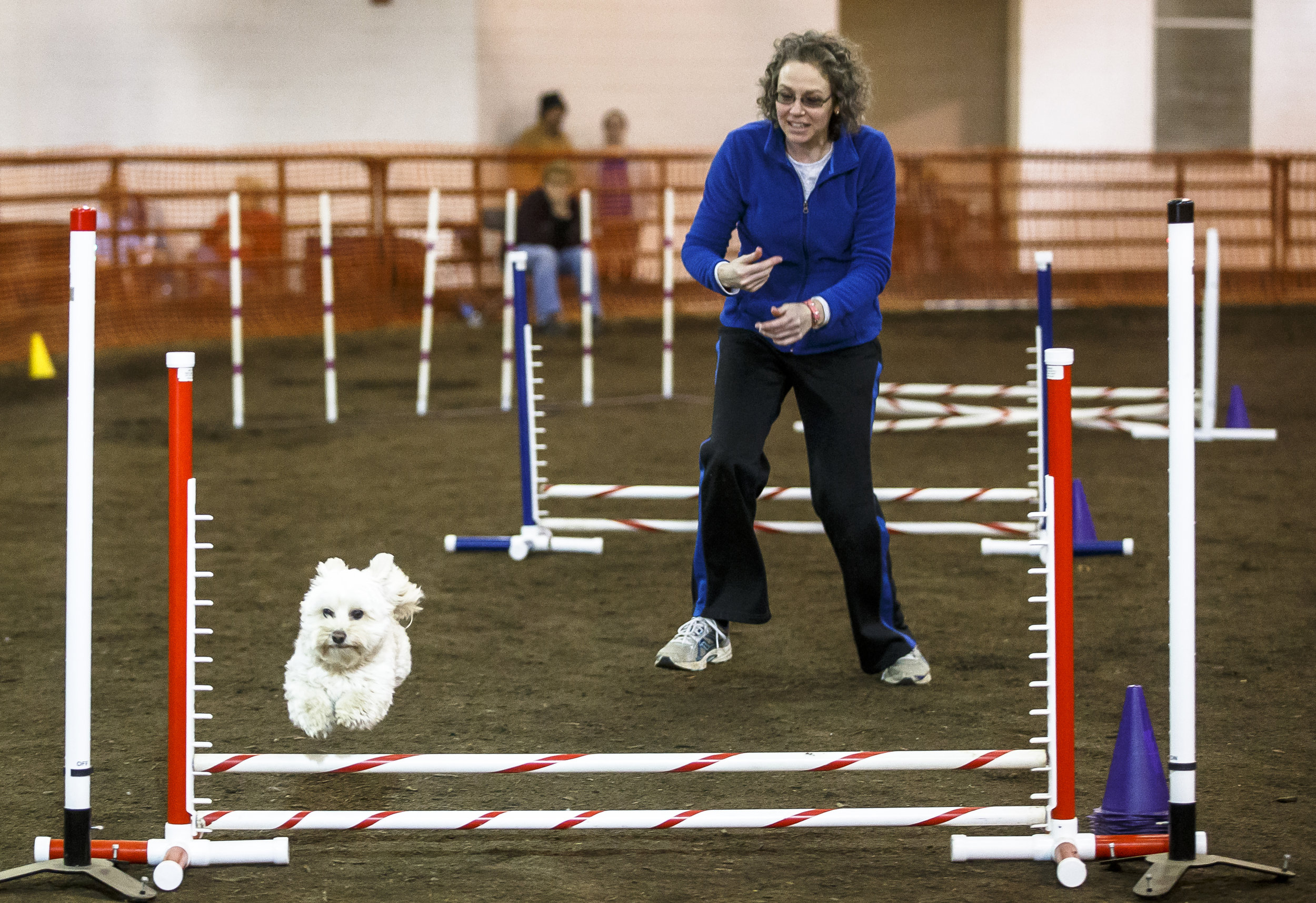Andrea Reese, navigates her Havanese, Newton, through the jumps during the Capitol Canine Training Club's Canine Performance Event Agility Trial at the Livestock Center on the Illinois State Fairgrounds, Sunday, April 8, 2018, in Springfield, Ill. [Justin L. Fowler/The State Journal-Register]