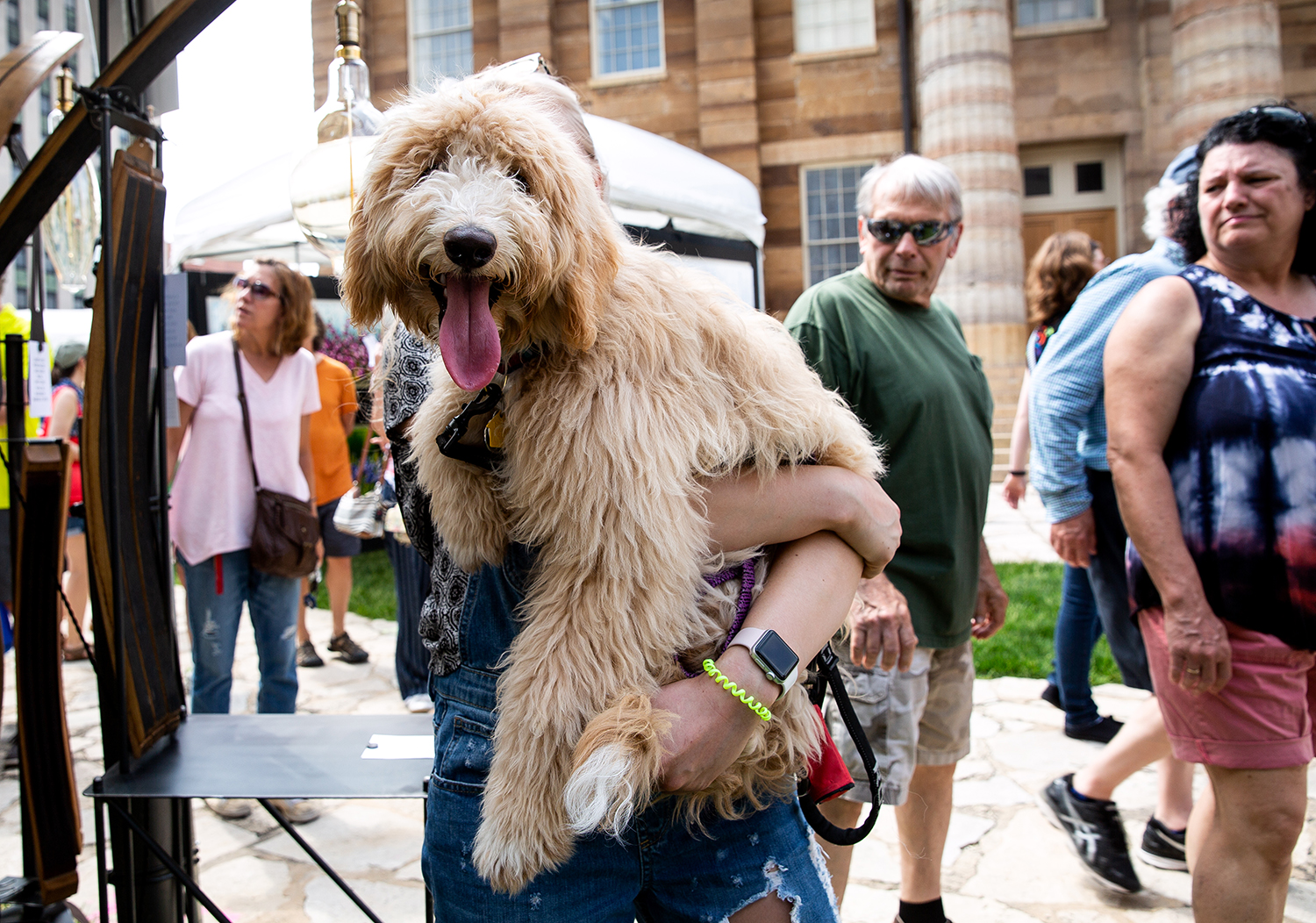 Jordy, a 6 month-old miniature golden doodle, isn't trained to walk in a straight line yet, her owner Hayley Brown claimed, so Brown carried her for a bit during their visit to the Old Capitol Art Festival Saturday, May 19, 2018 at the Old State Capitol in Springfield, Ill. [Rich Saal/The State Journal-Register]