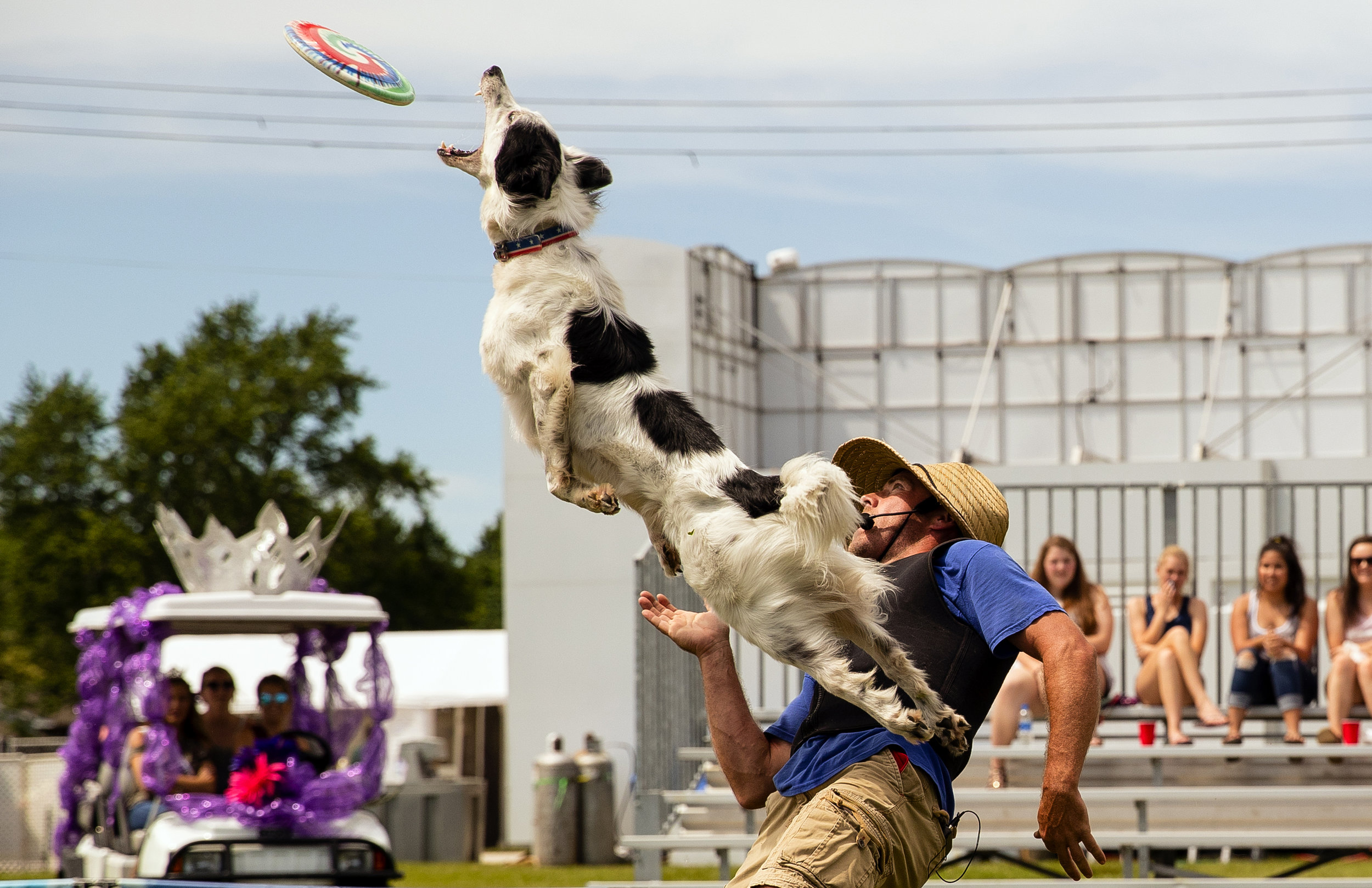 Matrix, a five-year-old border collie, takes a flying leap off Jonathan Offi to snatch a flying disc during the Canines in the Clouds afternoon performance at the Sangamon County Fair Wednesday, June 13, 2018. The event, a sport, stunt and trick dog show, features rescue dogs and encourages people to donate, rescue, foster,  transport, volunteer, and or adopt a dog that matches your lifestyle. [Ted Schurter/The State Journal-Register]