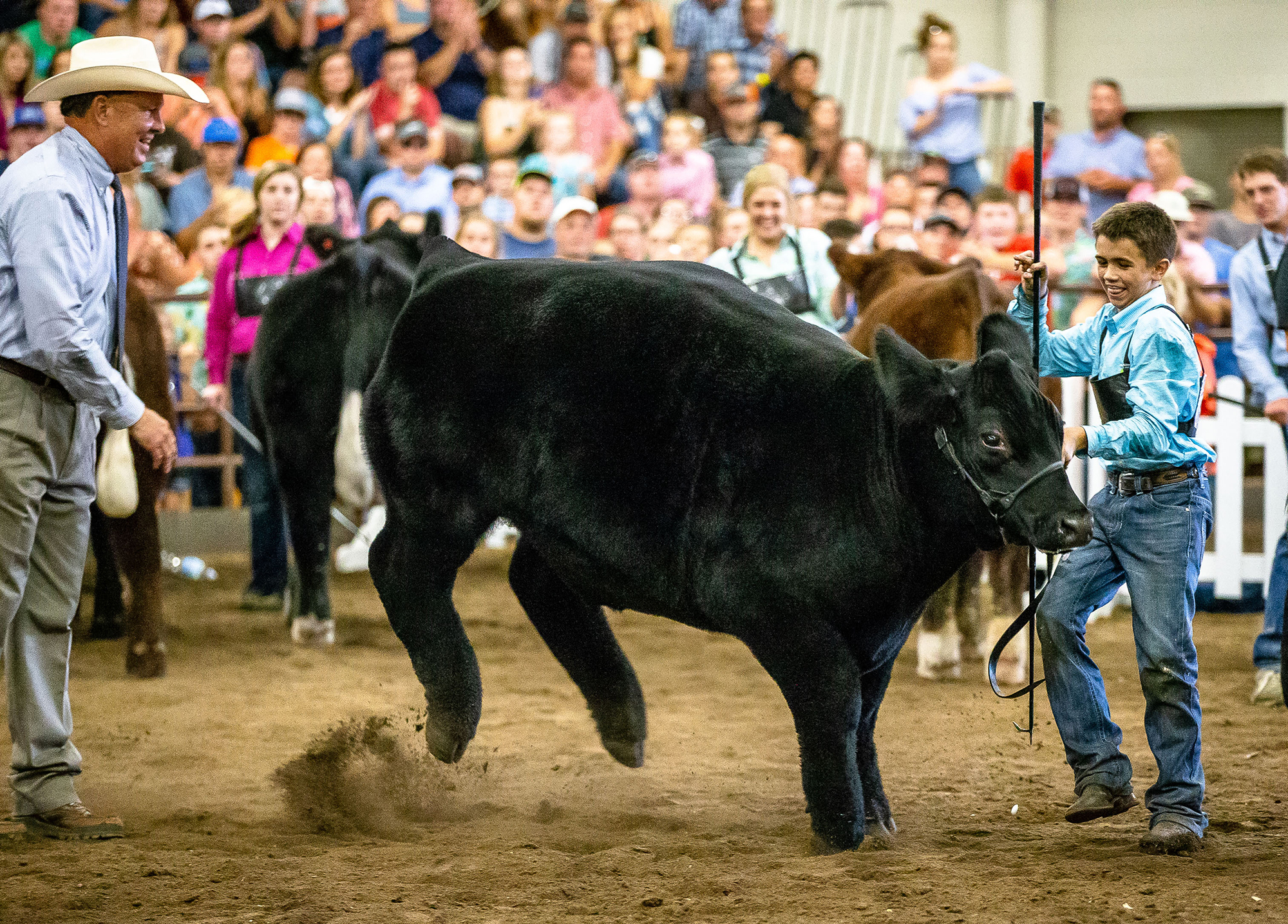 Adam Miller, 13, right, of Gridley, Ill., holds on tight to his Crossbred steer, Taco, when he rears up after being picked as the Grand Champion Steer by judge Chris Skaggs, left, Associate Dean for Student Development at Texas A&M University, during the Parade of Champions at the Illinois State Fair In the Livestock Center at the Illinois State Fairgrounds, Saturday, Aug. 11, 2018, in Springfield, Ill. The winners will go on to be sold during the Governor's Sale of Champions on Tuesday, August, 14, at 5 p.m. at the Livestock Center. [Justin L. Fowler/The State Journal-Register]