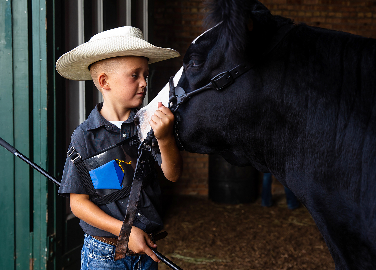 """Kolten Greenhorn, 8, of Waynesville, Ohio, tends to his Low Percentage Simmental Female named """"Princess"""" prior to judging in the Livestock Center during the Illinois State Fair at the Illinois State Fairgrounds, Friday, Aug. 10, 2018, in Springfield, Ill. Greenhord and """"Princess"""" won the Low Percentage Simmental Female Grand Champion award in the beef cattle category during the Open Livestock show at the Livestock Center. [Justin L. Fowler/The State Journal-Register]"""
