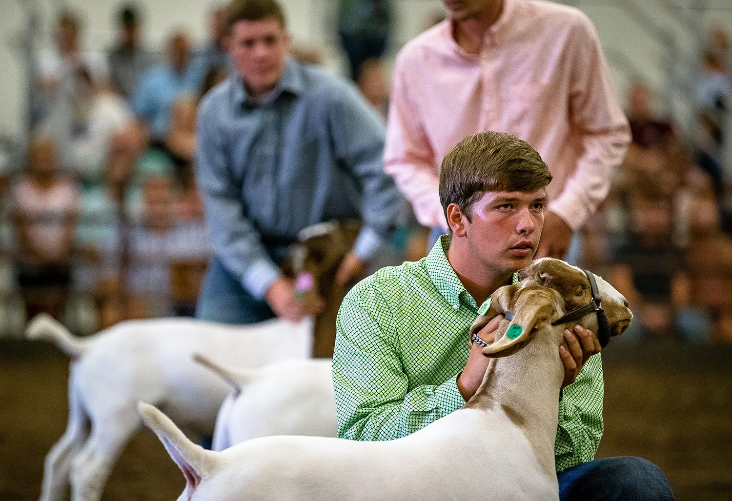 Chase Tomhave, 19, of Jacksonville, Ill., keeps his meat goat wether at attention during judging during the Parade of Champions at the Livestock Center during the Illinois State Fair at the Illinois State Fairgrounds, Saturday, Aug. 11, 2018, in Springfield, Ill. [Justin L. Fowler/The State Journal-Register]