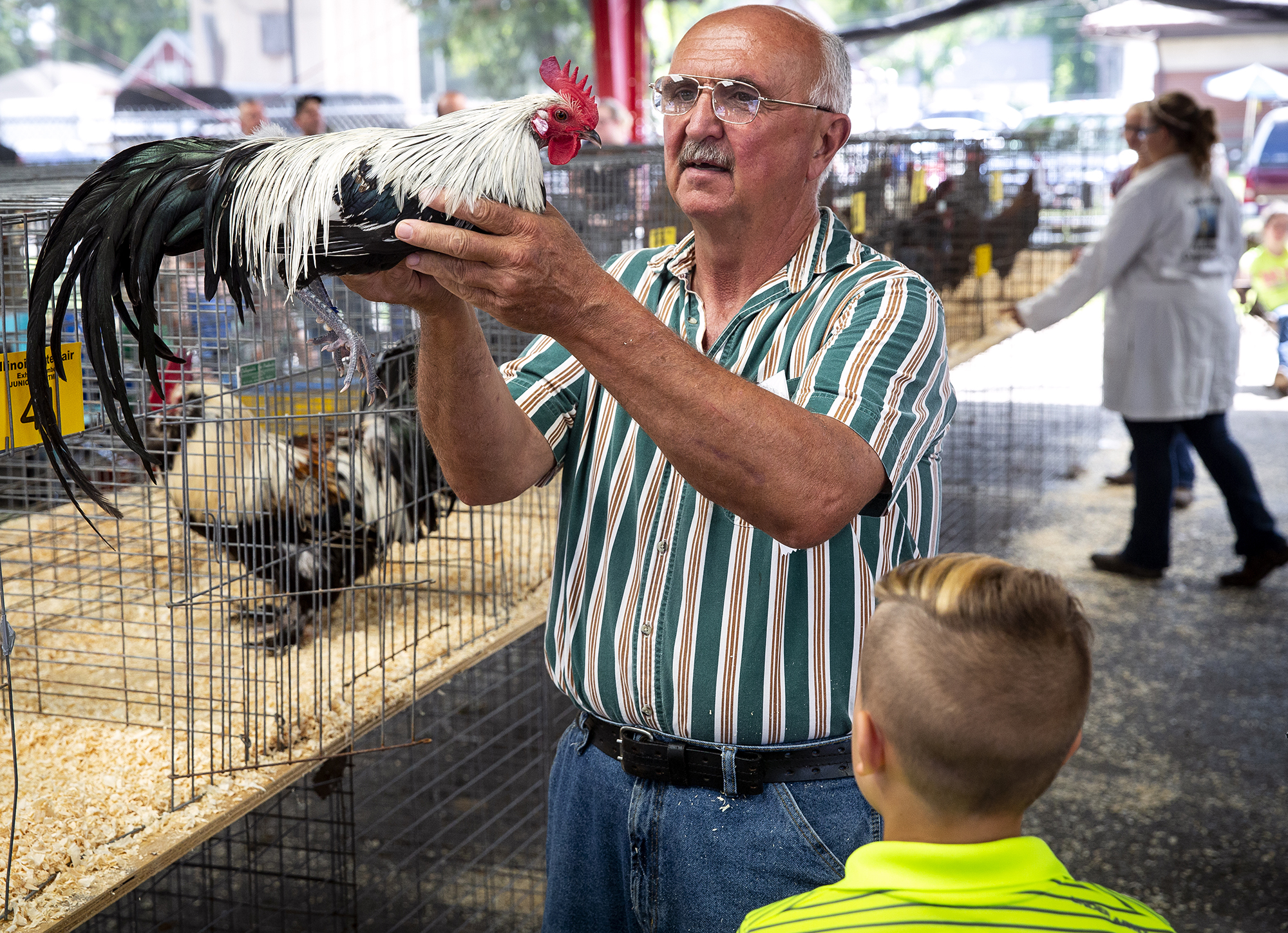 Poultry judge Tim Bowles studies the chicken, a Silver Phoenix, entered by Wyld Gilmore of Carlinville Wednesday, Aug. 8, 2018 on the Illinois State Fairgrounds in Springfield, Ill. Judging was held for all classes of poultry including chickens, turkeys and waterfowl, even though the Illinois State Fair opens officially on Thursday. [Rich Saal/The State Journal-Register]