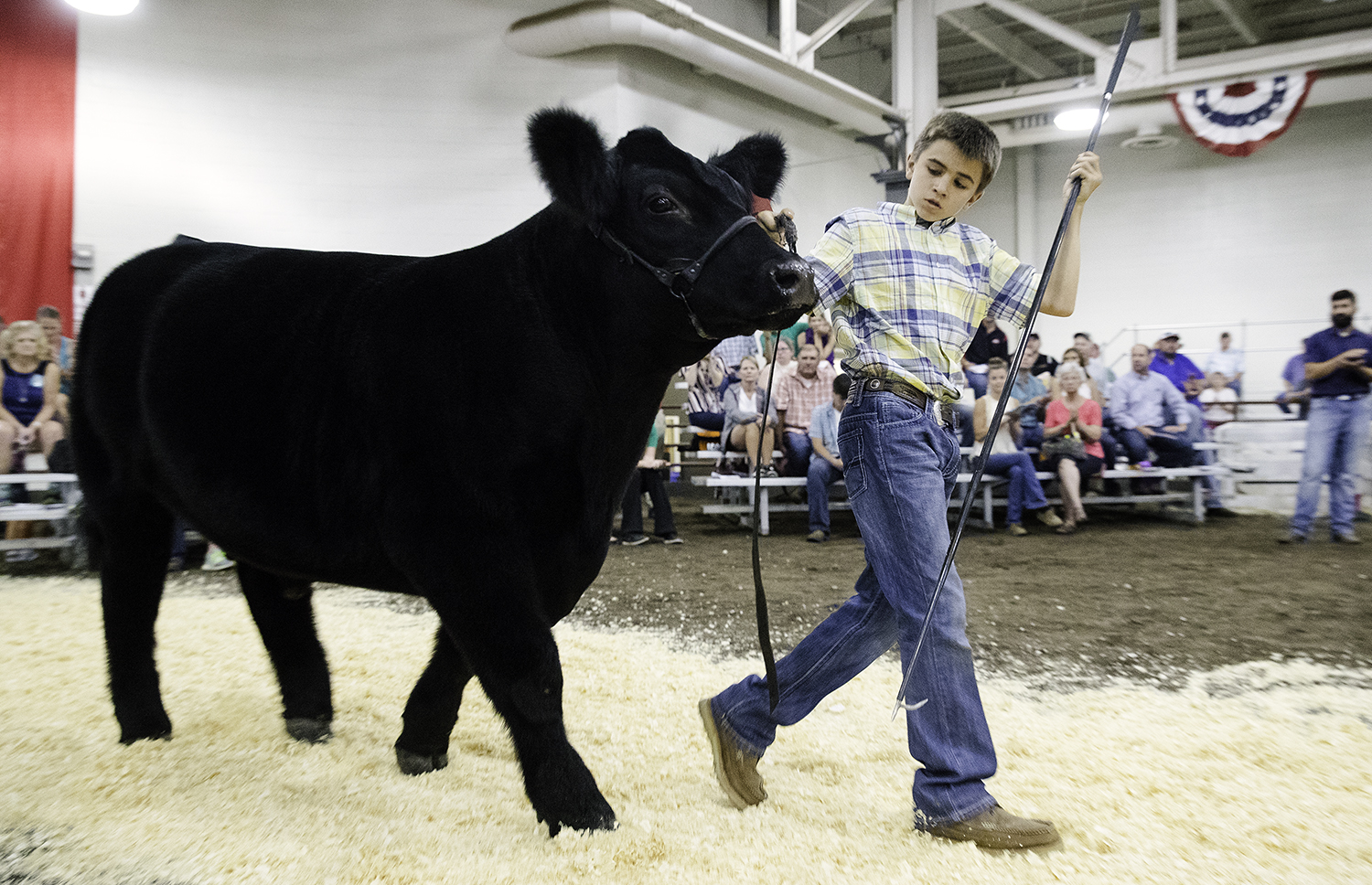 Adam Miller leads Taco, his Grand Champion Steer, down the aisle at the Governor's Sale of Champions at the Livestock Center at the Illinois State Fair Tuesday, Aug. 14, 2018. The steer sold for $60,000. [Ted Schurter/The State Journal-Register]