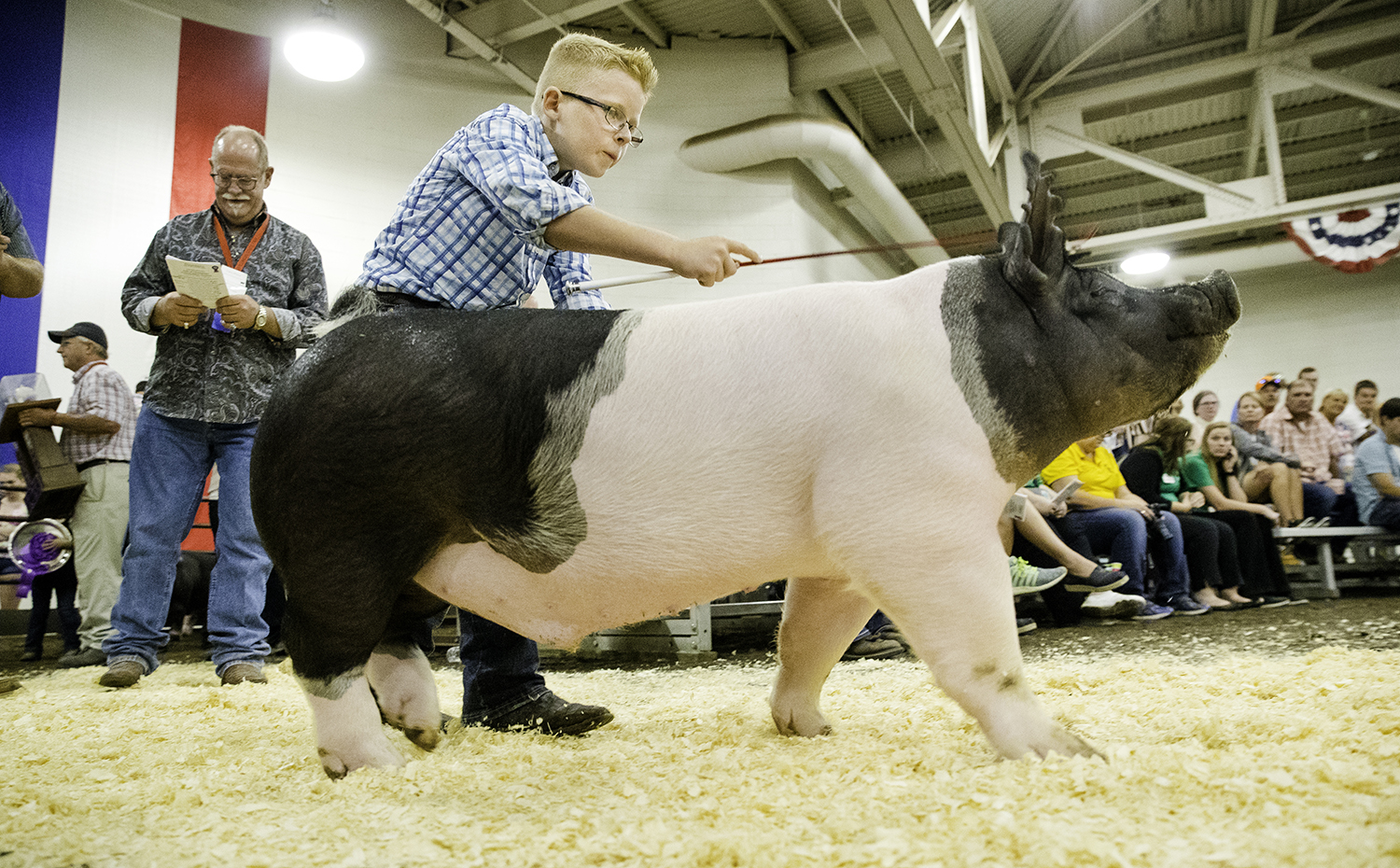 Morgan Wagner drives his Land of Lincoln Grand Champion Barrow down the aisle at the Governor's Sale of Champions at the Livestock Center Tuesday, Aug. 14, 2018. [Ted Schurter/The State Journal-Register]