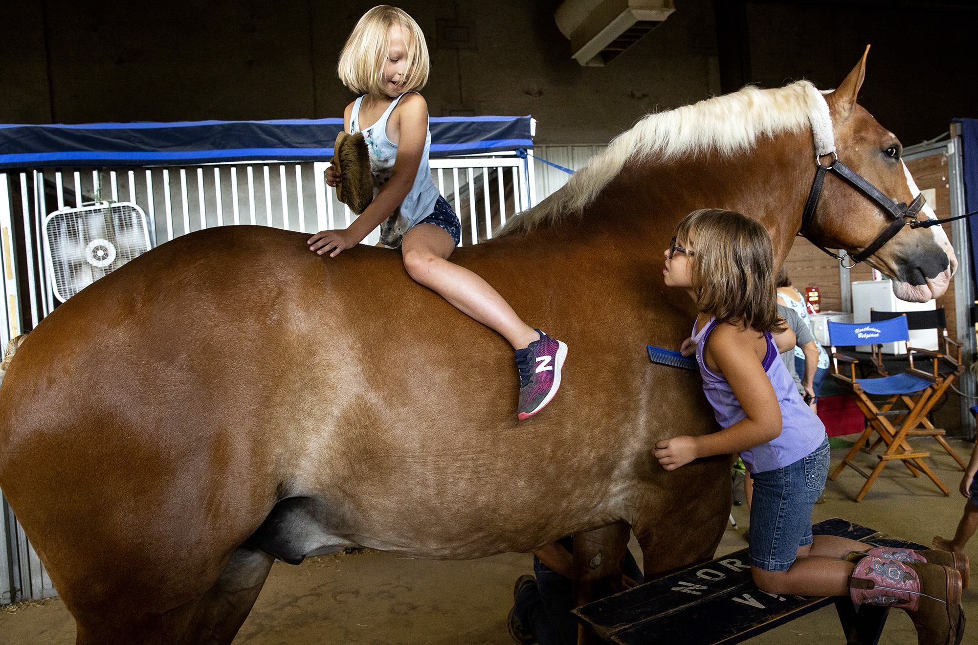 Ava Mrozinski, 8, and her sister, Olivia, 7, groom the family's Belgian horse, Bob, for the draft horse youth cart class at the the Illinois State Fair Tuesday, Aug. 14, 2018 on the state fairgrounds in Springfield, Ill. The Mrozinskis are from LaPorte, Ind. (Rich Saal/The State Journal-Register via AP)