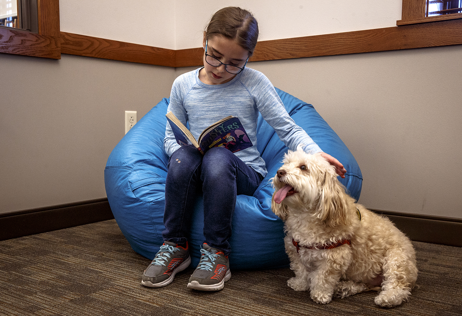 "Murphy, a two-year-old havanese and certified therapy dog belonging to Alice Lasswell, listens at attention as Michelle Albers, 8, pets him while reading a book from the ""Key Hunters"" series during the Paws to Read program at Williamsville Public Library and Museum, Monday, March 12, 2018, in Springfield, Ill. The program offers a space for reluctant readers to read aloud to Murphy to help them feel more comfortable while practicing reading. The program will be offered again on April 16th at the WPLM at 6 p.m. [Justin L. Fowler/The State Journal-Register]"