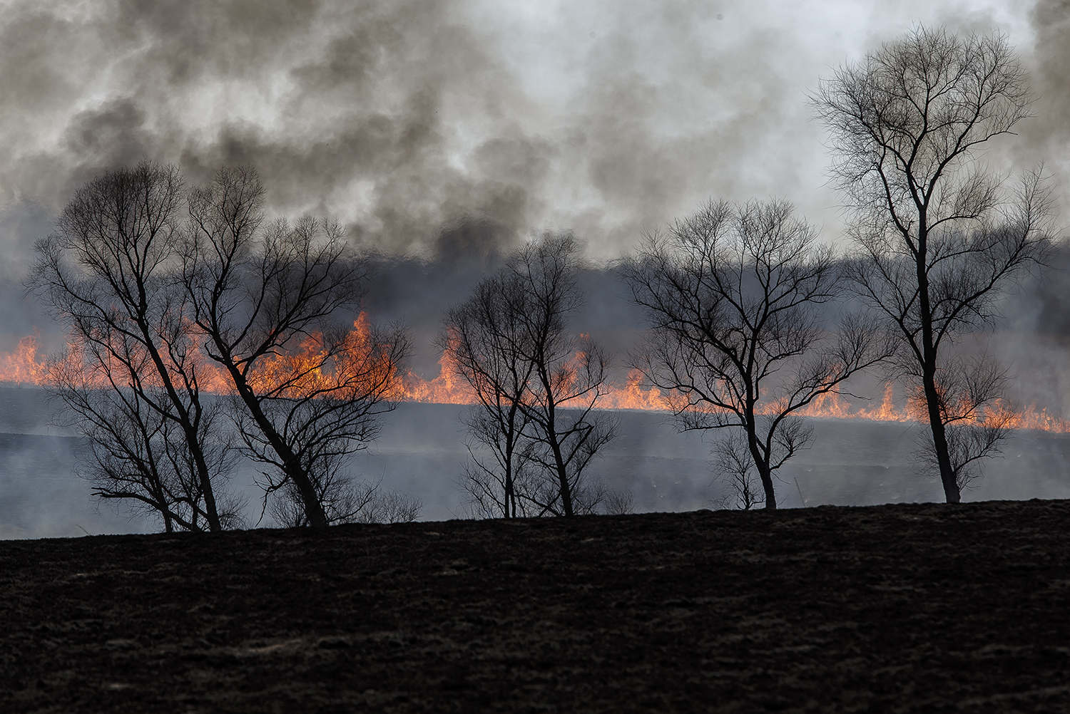 The fire from a controlled burn races up a hillside as a fire crew of volunteers from the Friends of Sangamon Valley perform a controlled burn at the Nipper Wildlife Sanctuary and the surrounding property, Thursday, March 15, 2018, in Loami, Ill. [Justin L. Fowler/The State Journal-Register]