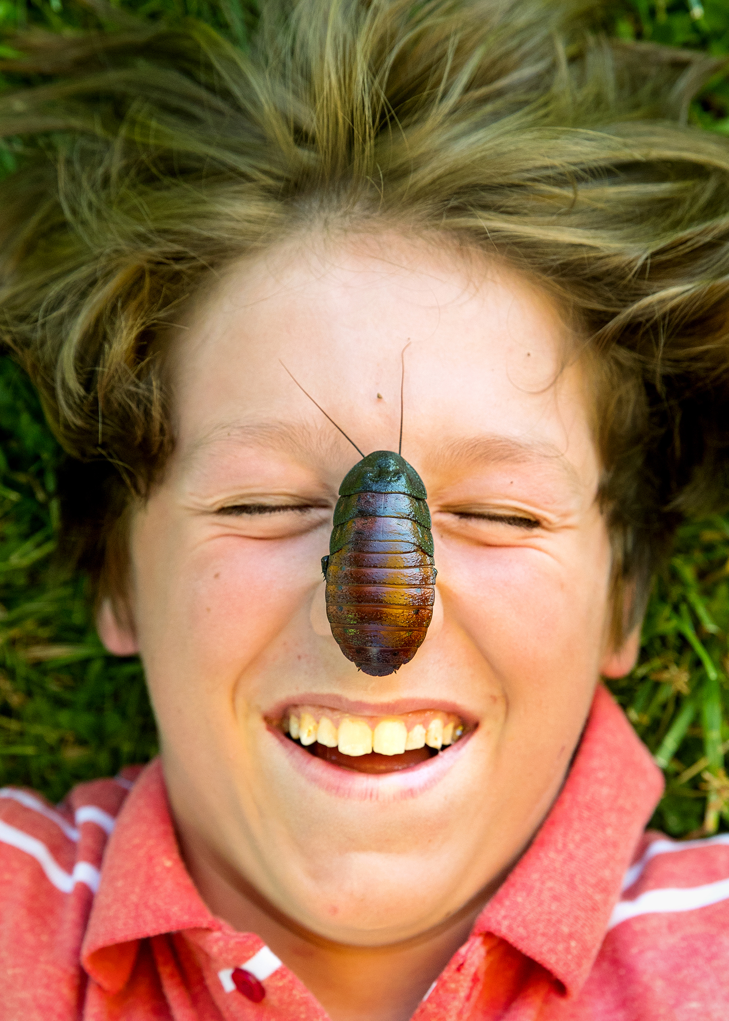 Jeremy Renfro of Loami winces as after a Madagascar Hissing Cockroach was placed on his nose at the Wild Time Exotics booth during the Loami Fourth of July Celebration Saturday, July 7, 2018. The large, wingless cockroach is one of the largest species and can reach between two and three inches in length. [Ted Schurter/The State Journal-Register]