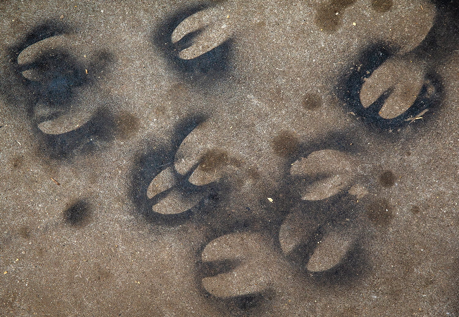 The remnants of painted hooves from the livestock shows are stenciled into the pavement outside the barns on the final day of the Illinois State Fair at the Illinois State Fairgrounds, Sunday, Aug. 19, 2018, in Springfield, Ill. [Justin L. Fowler/The State Journal-Register]