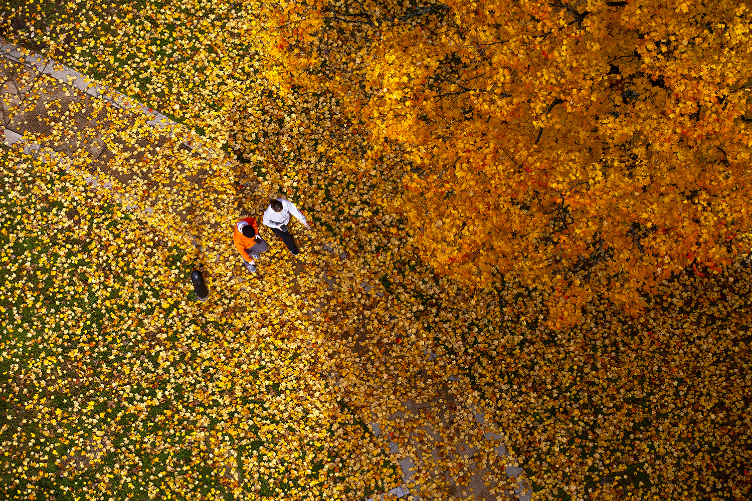 Dylan and Taylor Fuda walk through a carpet of orange and yellow leaves on the ground from the maple trees near the Rees Memorial Carillon Friday, Nov. 2, 2018 in Washington Park in Springfield, Ill. [Rich Saal/The State Journal-Register]