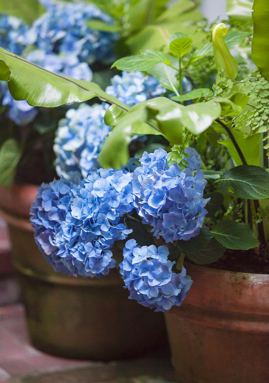 Elizabeth Everdell Garden Design