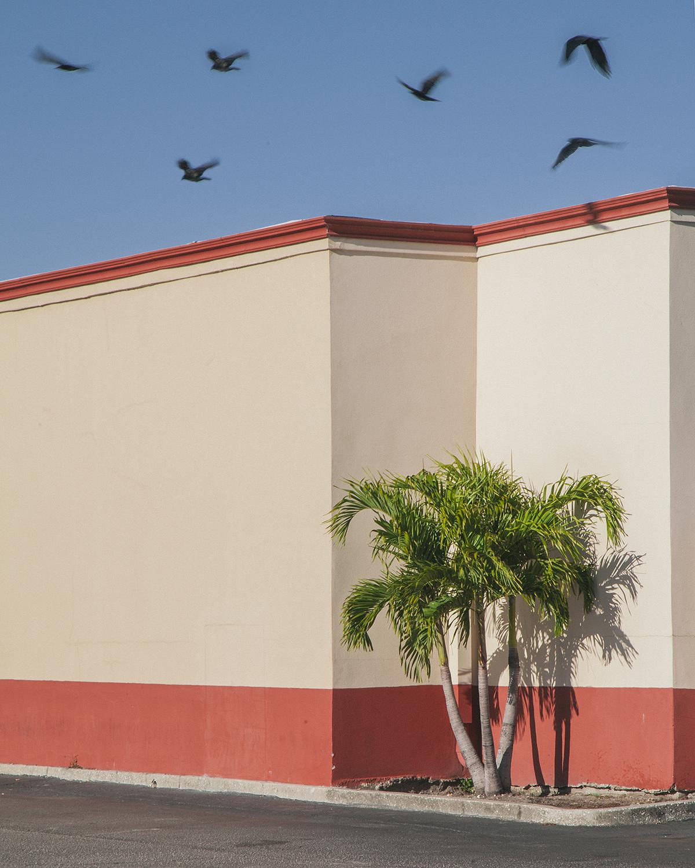 for the birds.jpg