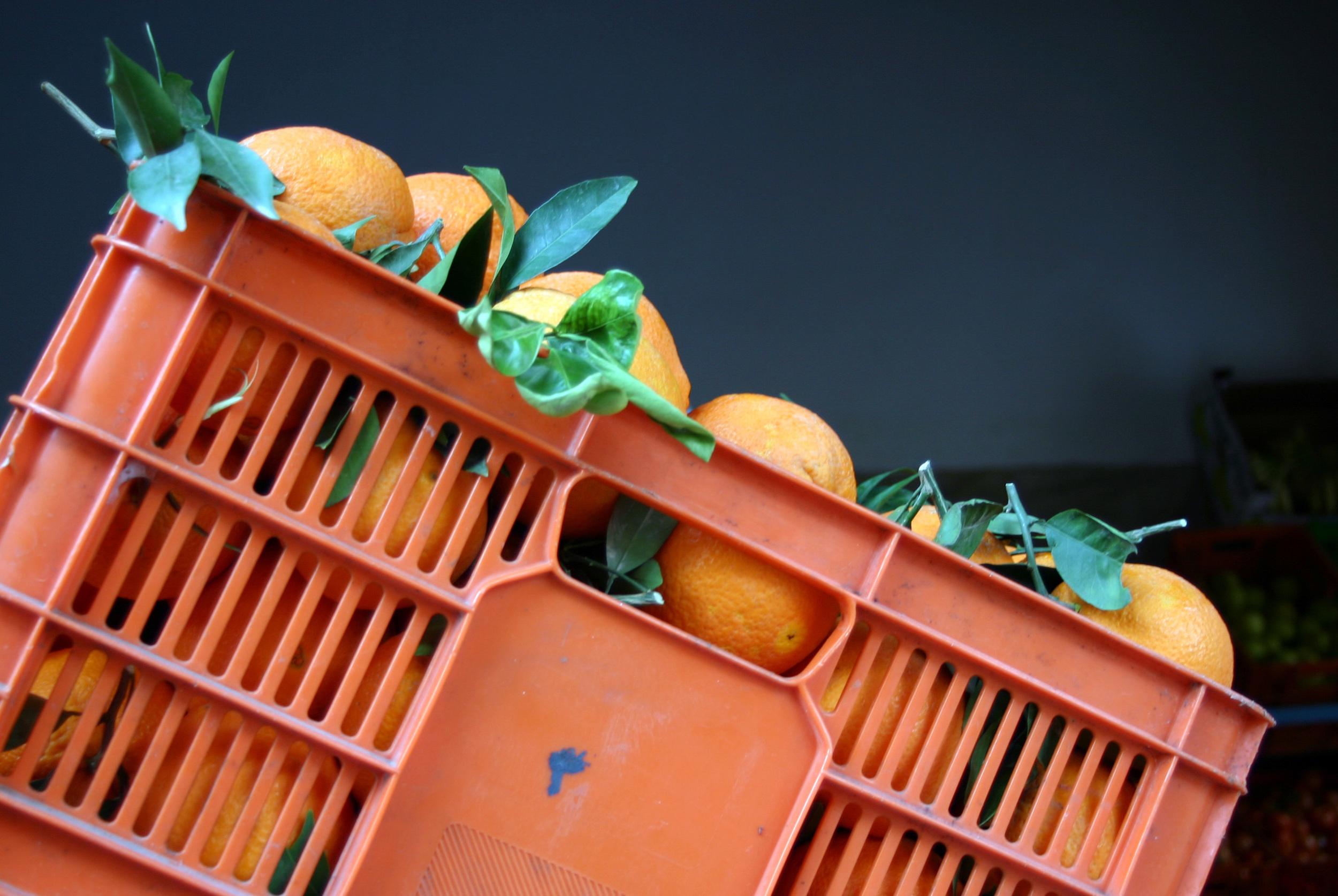 akko oranges.jpg