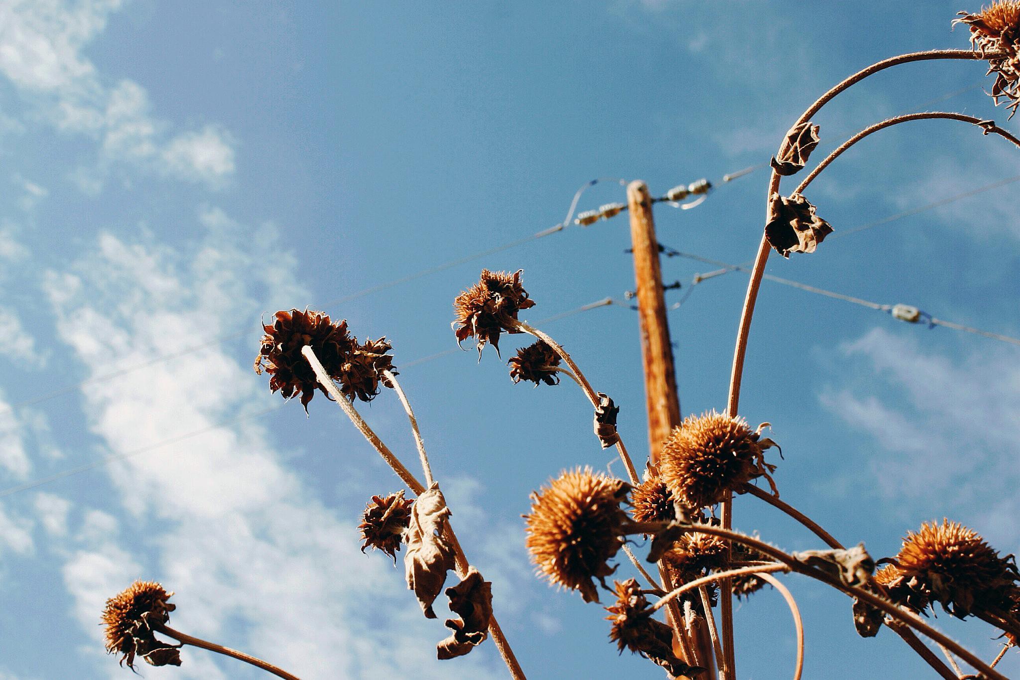 wireflowers.jpg