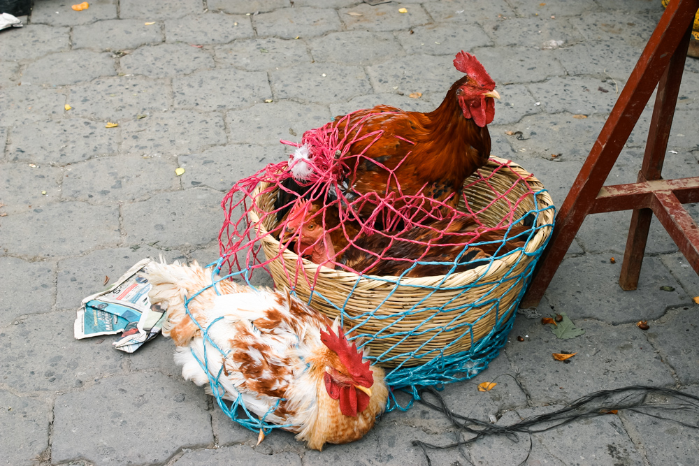 chickens (1 of 1).jpg