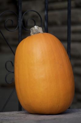 Pumpkin, Pumpkin Ideas, Fall Pumpkin, Outdoors, Loving fall