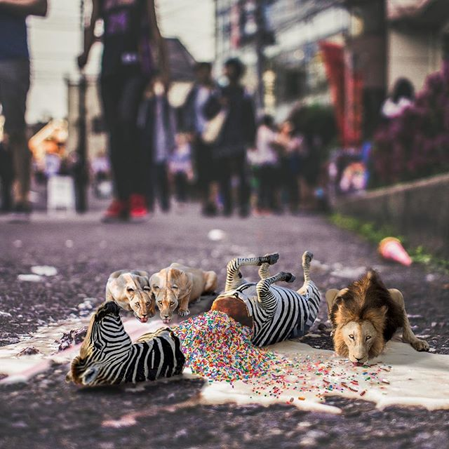 When lions kill for an ice-cream🍦🙈🦁🦓🐈 #edit_mania__ #thegraphicspr0ject #edit_perfection #conceptartist #conceptual #agameoftones #vsco #arte #design #art #graphicdesign #ig_masterpiece #igmasters #instagood #instadaily #instacool #artistsoninstagram #artistsofinstagram #theuniversalart #awesome_surreal #surrealart #ig_exquisite #thecreatorclass #createart #creartmood #photoshop