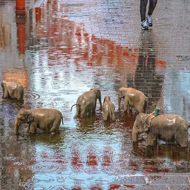 Water for elephants 🌧🐘#conceptartist #agameoftones #vsco #arte #art #thegraphicspr0ject #edit_perfection #theuniversalart #graphicdesign #design #artistsoninstagram #artistsofinstagram #elephant #igmasters #igmasterpiece #conceptart #thecreatorclass #igcreative_editz #rain #instagood #instadaily #instacool #surrealart #thecreativeshots #edit_grams