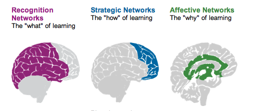 "Diagram of UDL model showing the recognition networks (the ""what"" of learning), the strategic networks (the ""how"" of learning), and the affective networks (the ""why"" of learning) of the brain."