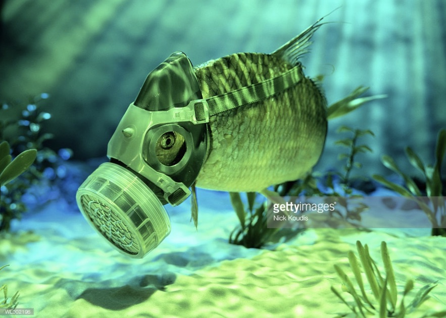Green Koudis fish gas mask.jpg