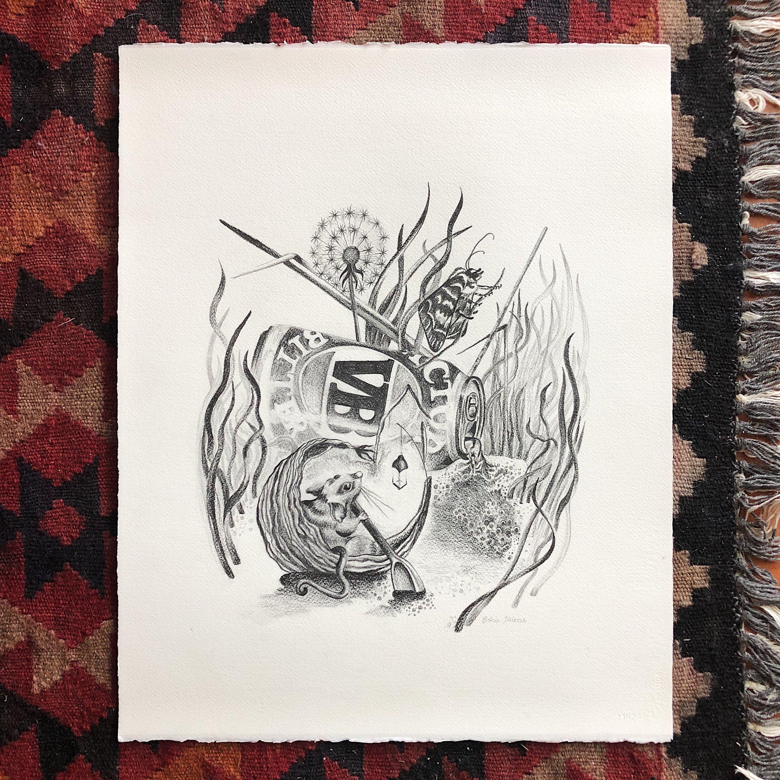 Pygmy Possum Drawing2.jpg
