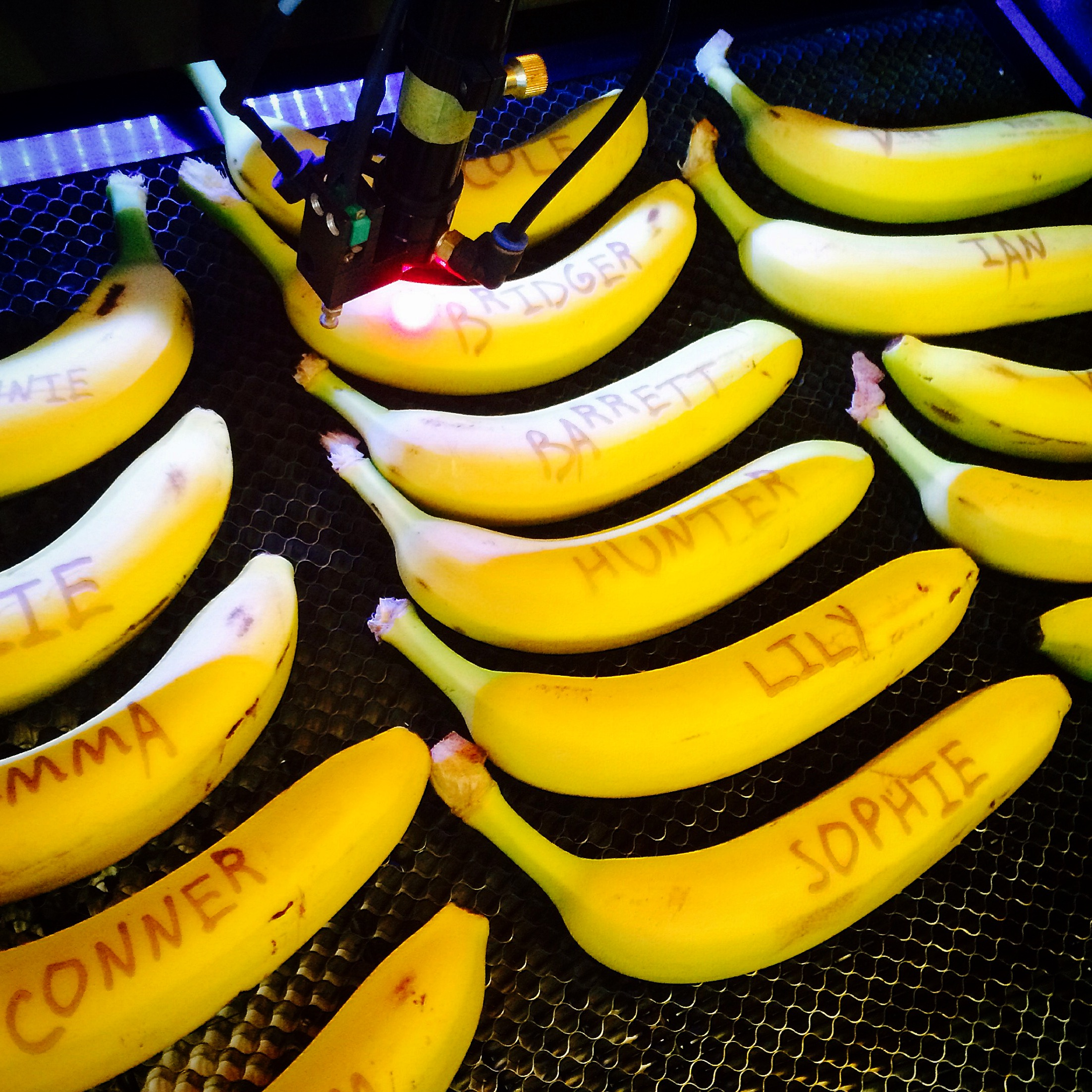 Laser Etched Bananas