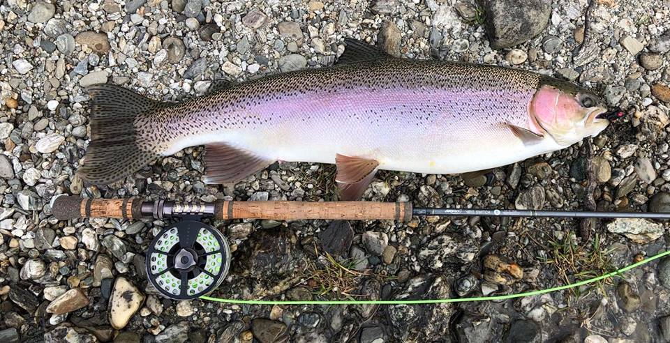 10lb's of Clutha river rainbow trout ! a superb specimen ....fresh from Lake dunstan on her winter spawning run.
