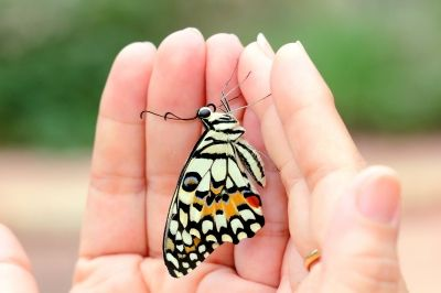 """Butterfly in Loving Hands"" Tarkul freedigitalphots.com"