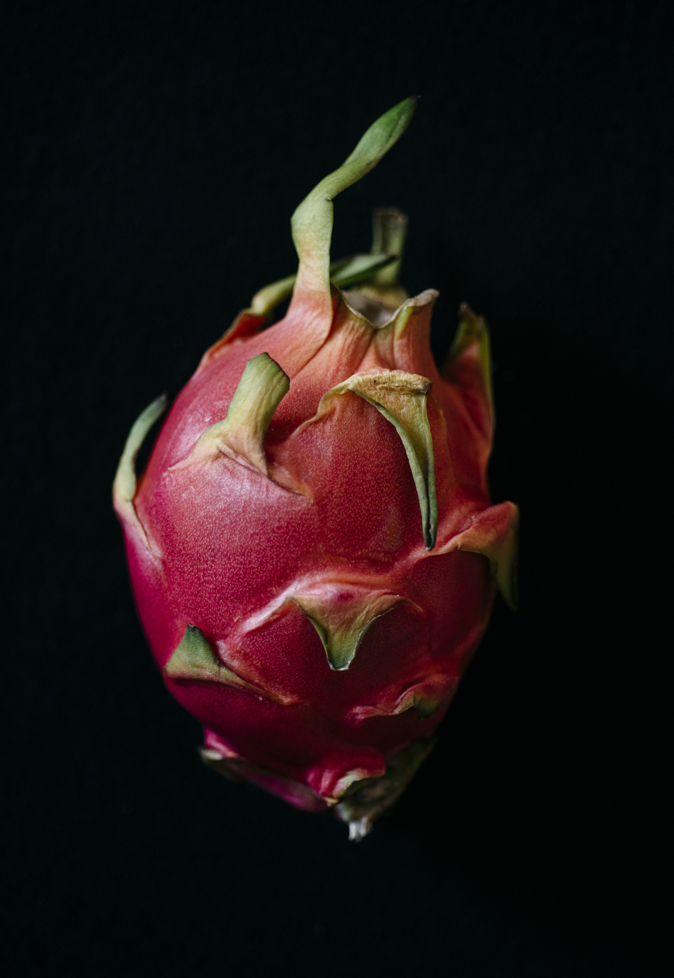 Image of a Dragonfruit on black by Los Angeles Food Photographer Rebecca Peloquin Photography as part of Dramatic Produce series
