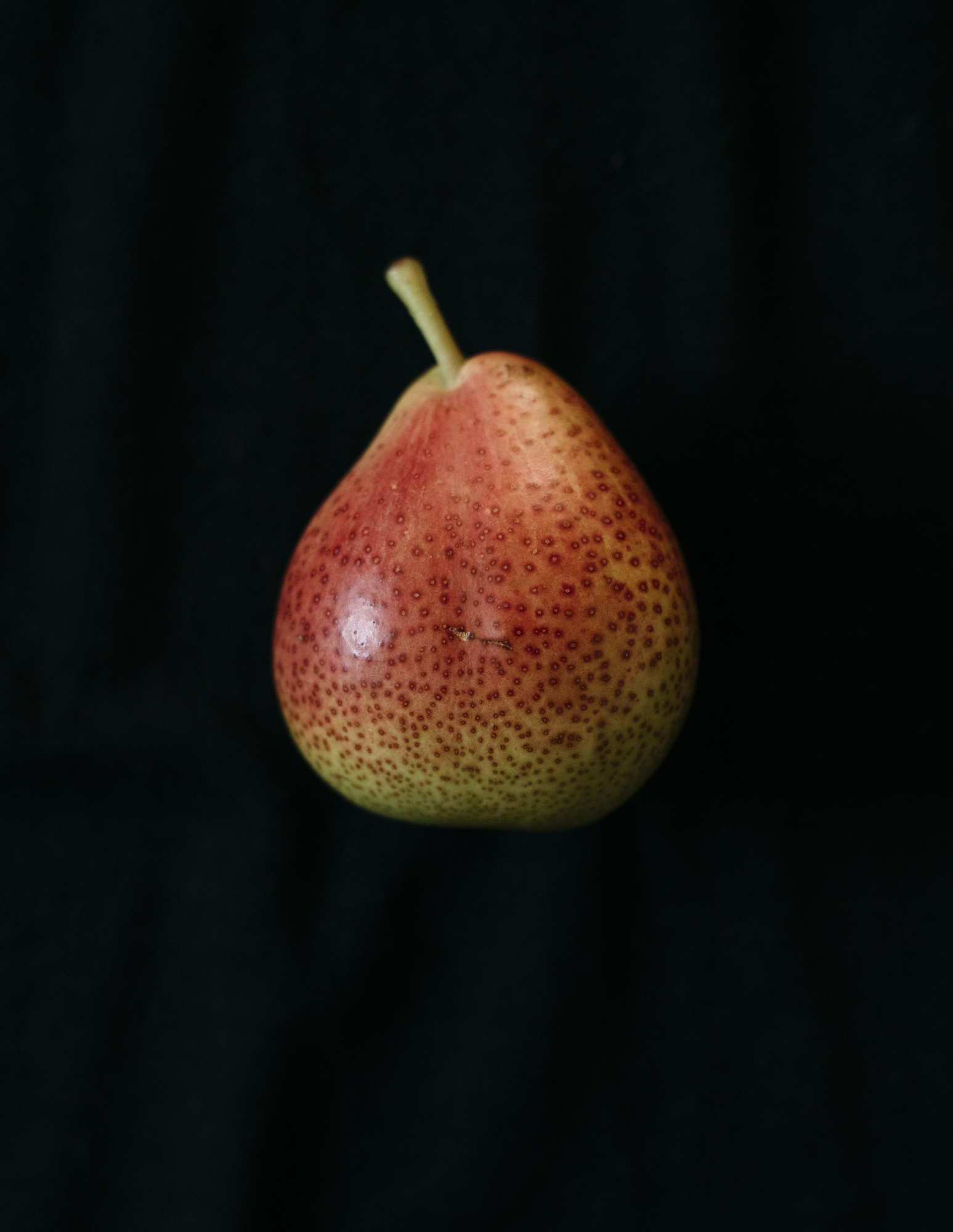 Image of a Forelle Pear on black by Los Angeles Food Photographer Rebecca Peloquin Photography as part of Dramatic Produce series
