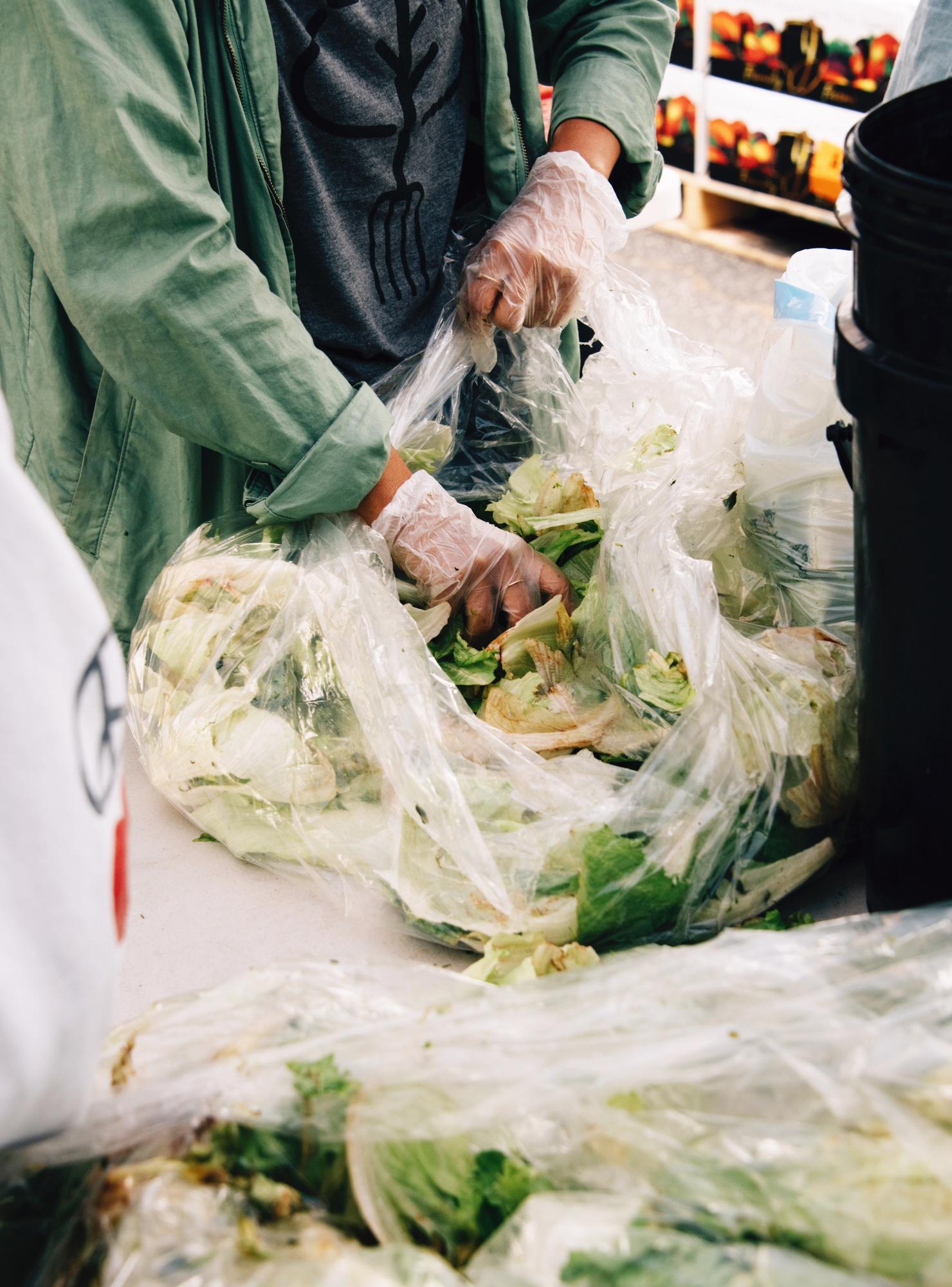 FoodForward_RebeccaPeloquin_019.JPG