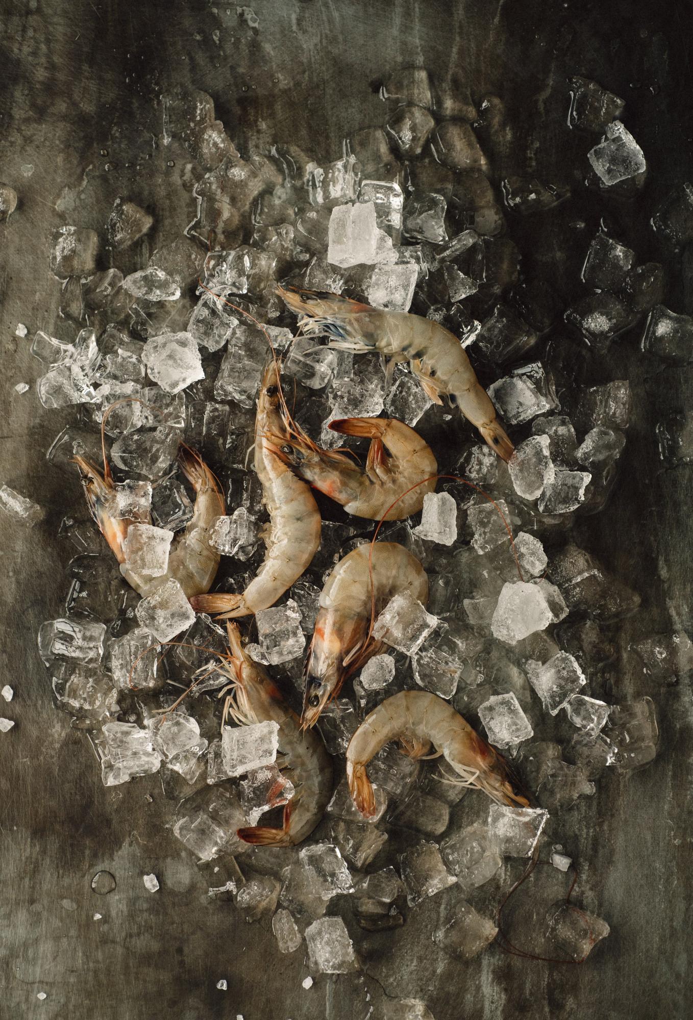 Shrimp003WEB.JPG