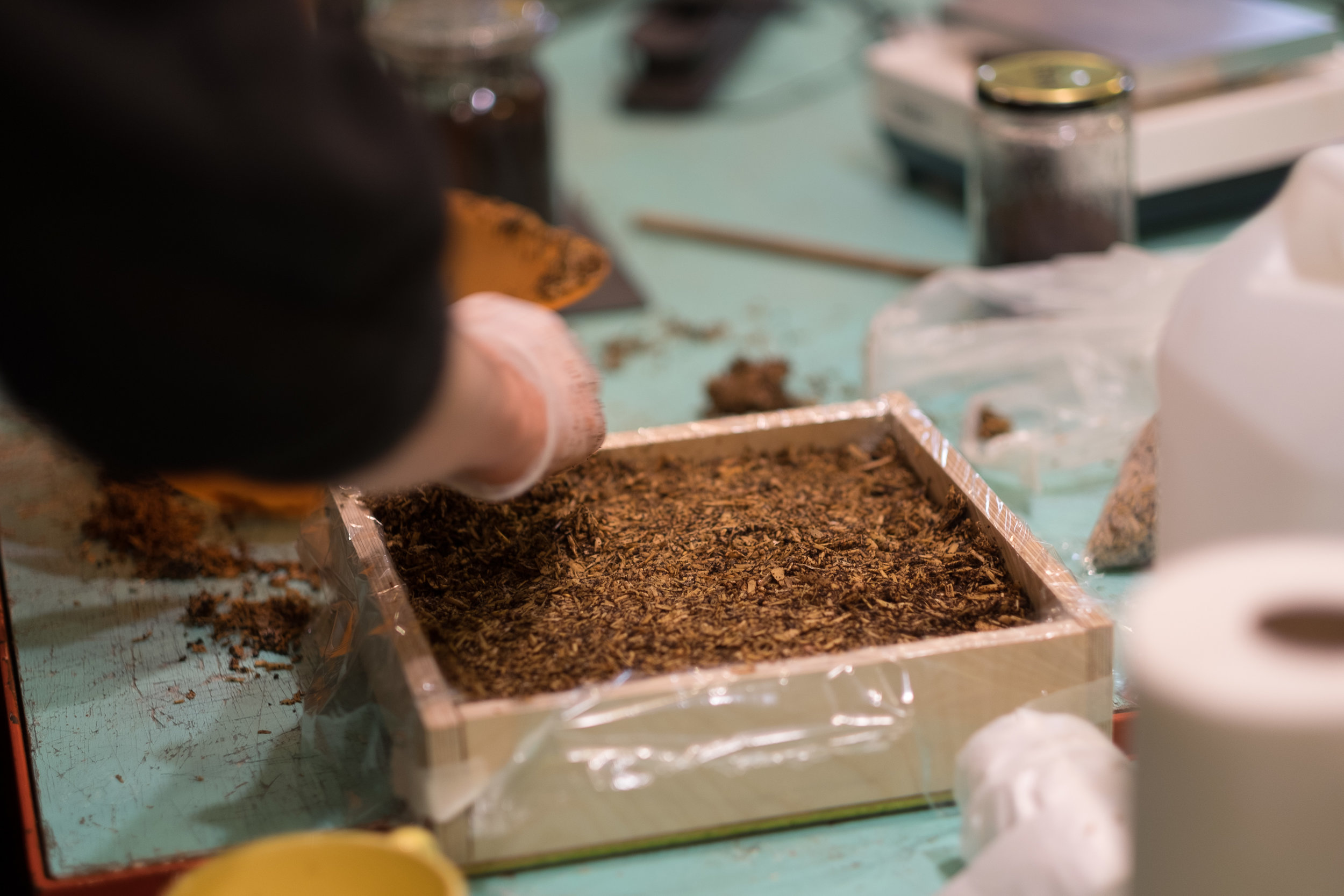 Placing the hemp fibres mixed with the mycelium in a mould.