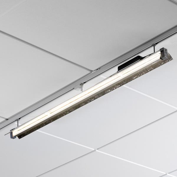 Ibis LED 6000