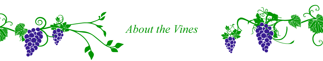 about-vines-text.jpg